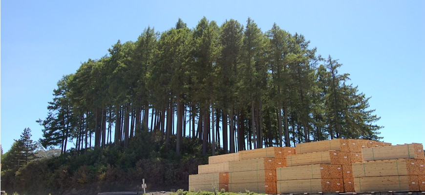 New zealand pine exporting companies sawn lumber new for Pine tree timber