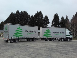Pacific Pine 1