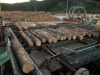 Logs on debarker deck at sawmill